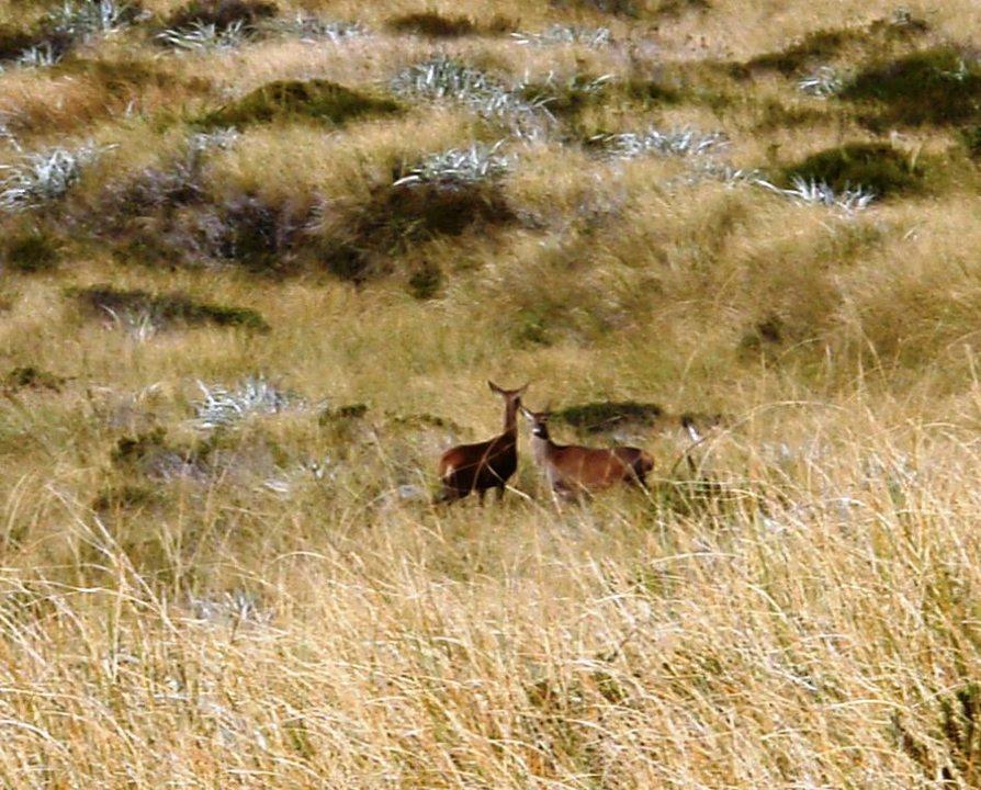 How Naturally Free Range Is Deer