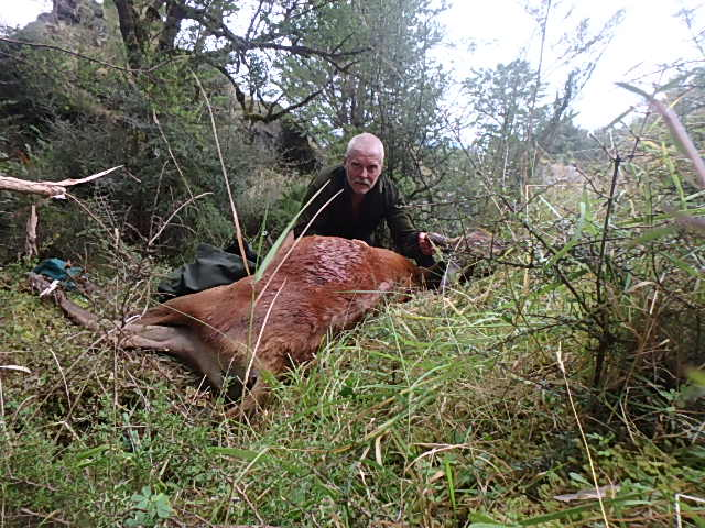 Red Deer hunting | Hunting Kiwi Style